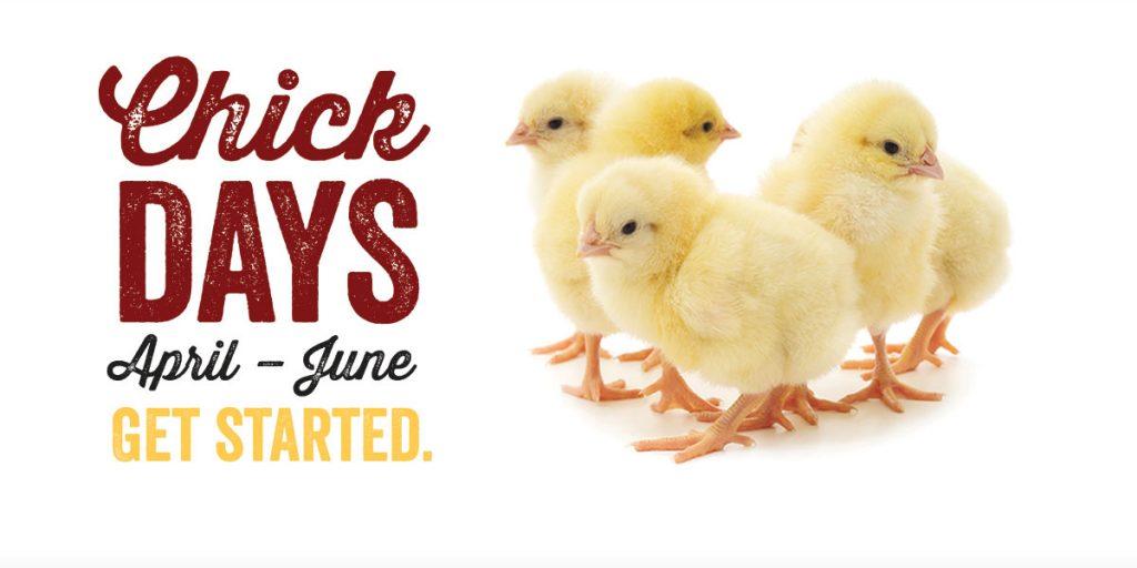 chick-days-slider